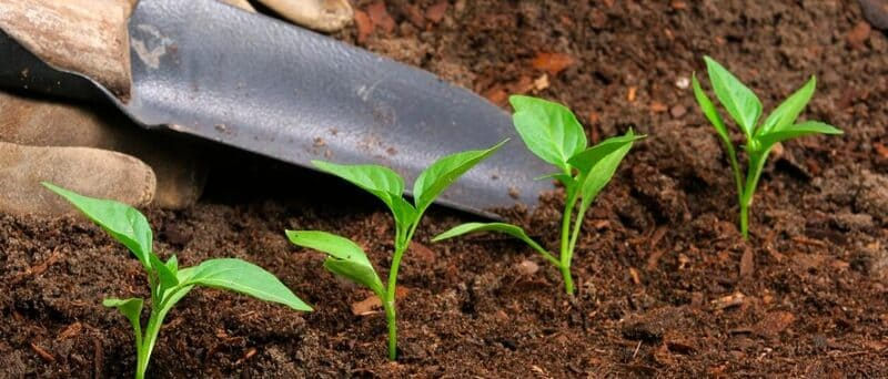 Cómo vender fertilizantes
